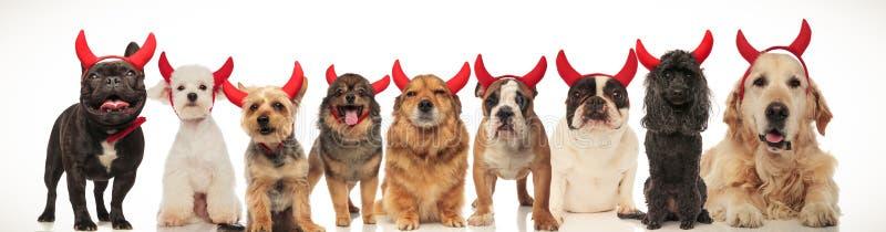 Adorable haloween les chiens utilisant des klaxons de diable rouge images libres de droits