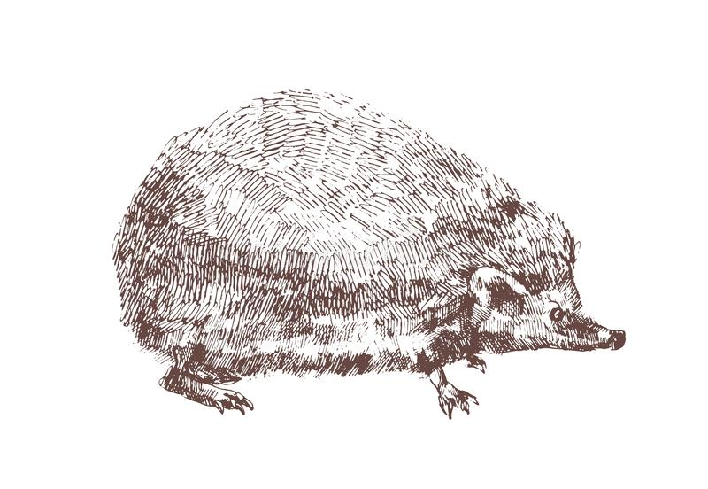 Adorable hedgehog hand drawn with contour lines on white background. Outline drawing of omnivorous nocturnal animal vector illustration