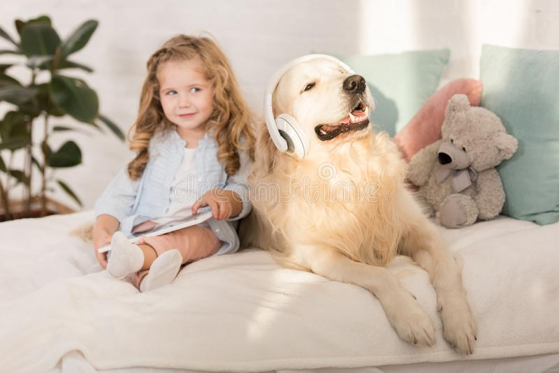 adorable kid holding tablet, funny golden retriever with headphones lying on bed stock photo