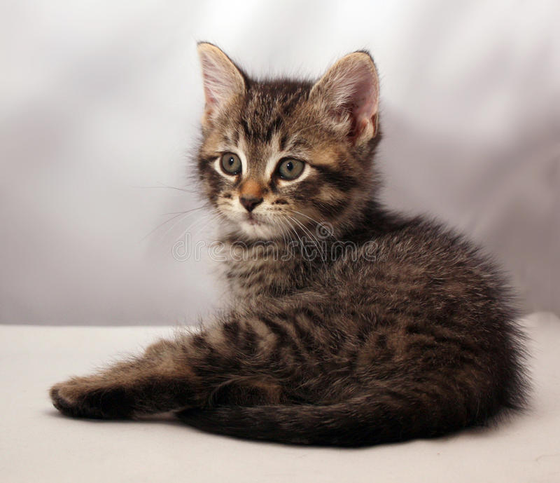 Adorable kitten 4. Adorable slept kitten looking foward stock photography