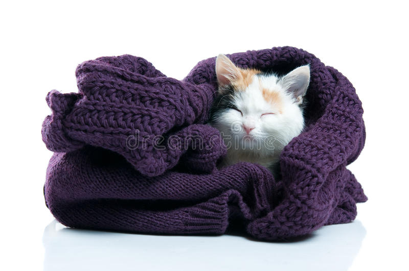 Adorable Kitten Sleeping Stock Image
