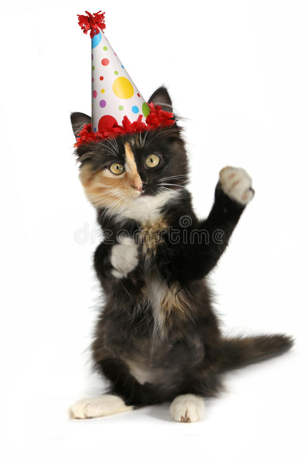 Adorable Kitten on a White Background With Birthday Hat. Kitten on a White Background With Birthday Hat royalty free stock photos