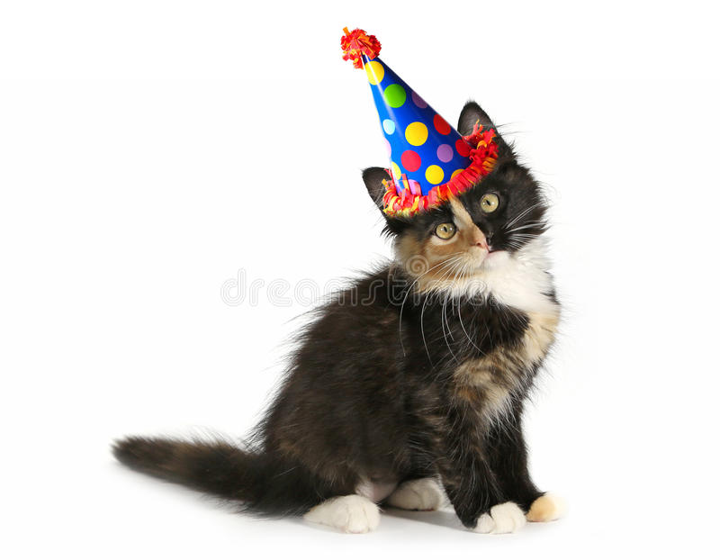Adorable Kitten on a White Background With Birthday Hat. Kitten on a White Background With Birthday Hat stock photo