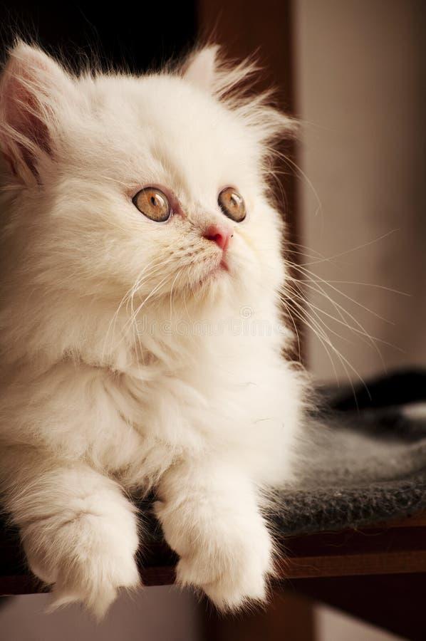 Adorable Kitten Royalty Free Stock Image