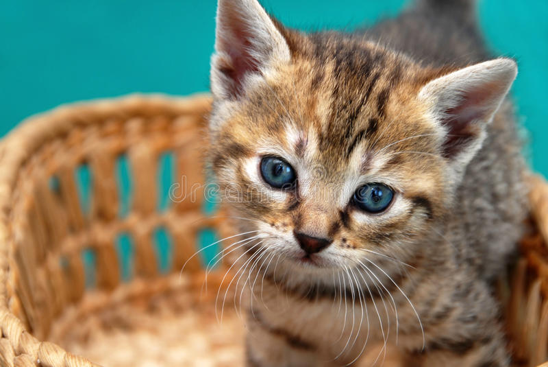 Download Adorable Kitty In Basket Stock Photo - Image: 26603560