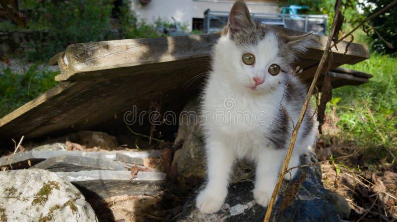 Adorable kleine Katze lizenzfreie stockfotos