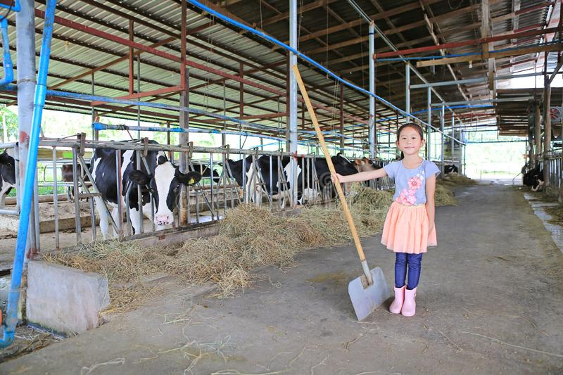 Adorable little Asian child girl in cows farms like a farmers stand and holding farmer shovel royalty free stock photo