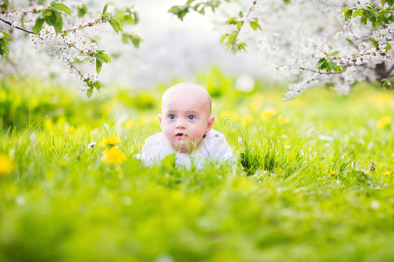 Adorable little baby boy in blooming apple garden stock photography