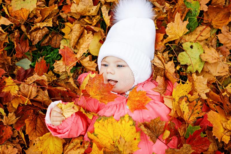 Adorable little baby girl in autumn park on sunny warm october day with oak and maple leaf stock image