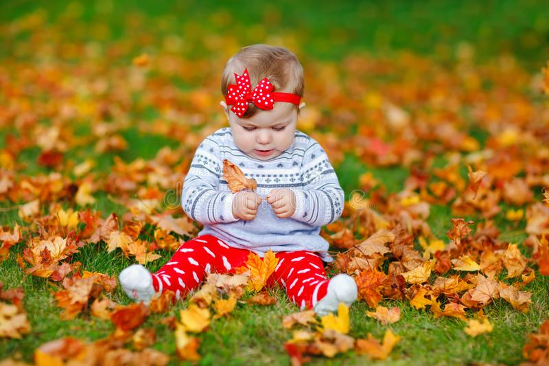Adorable little baby girl in autumn park on sunny warm october day with oak and maple leaf. Fall foliage. Family outdoor stock image