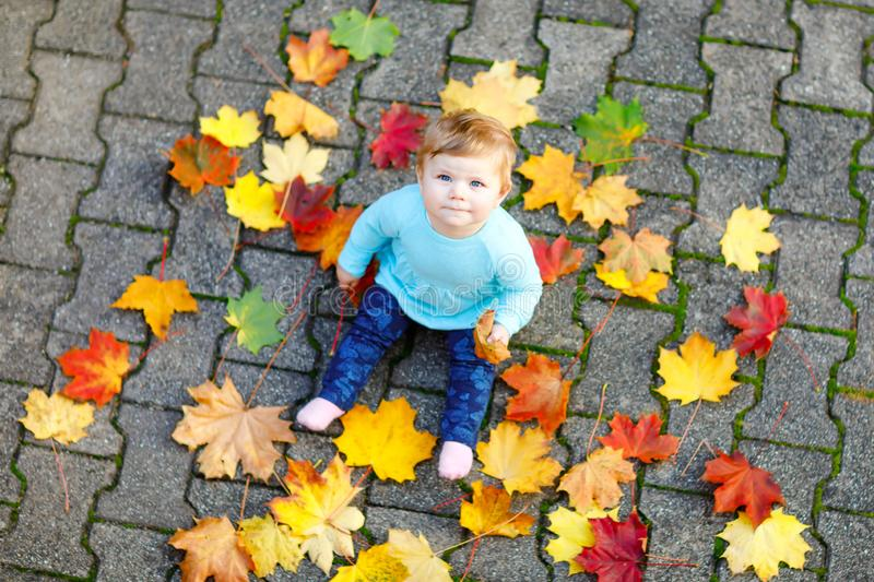 Adorable little baby girl in autumn park on sunny warm october day with oak and maple leaf. Fall foliage. Family outdoor stock photo