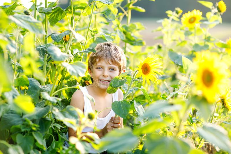 Adorable little blond kid boy on summer sunflower field outdoors. Cute preschool child having fun on warm summer evening. At sunset. Kids and nature royalty free stock images