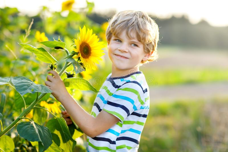 Adorable little blond kid boy on summer sunflower field outdoors. Cute preschool child having fun on warm summer evening stock photography