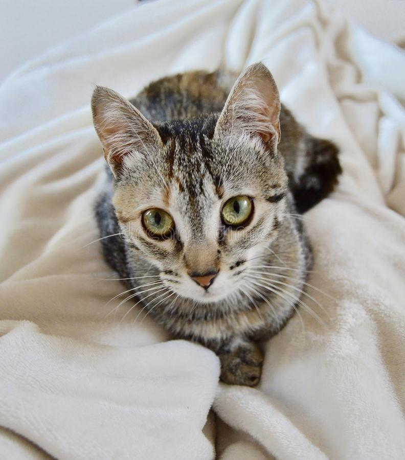 Adorable little face of a beautiful kitten looking at you royalty free stock photos