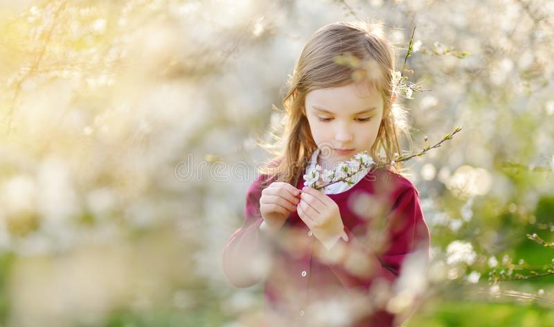 Adorable little girl in blooming cherry tree garden on beautiful spring day. Cute child picking fresh cherry tree flowers at spring stock photos