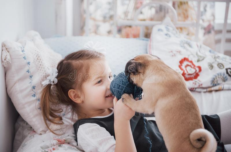 Adorable little girl feeding cute pug. She bought a puppy. the best friend.  royalty free stock photo