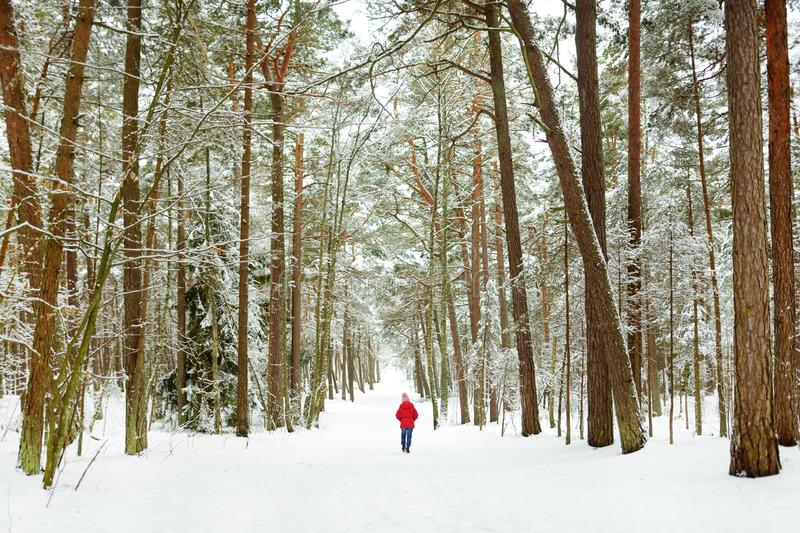 Adorable little girl having fun in beautiful winter forest. Happy child playing in a snow stock photography