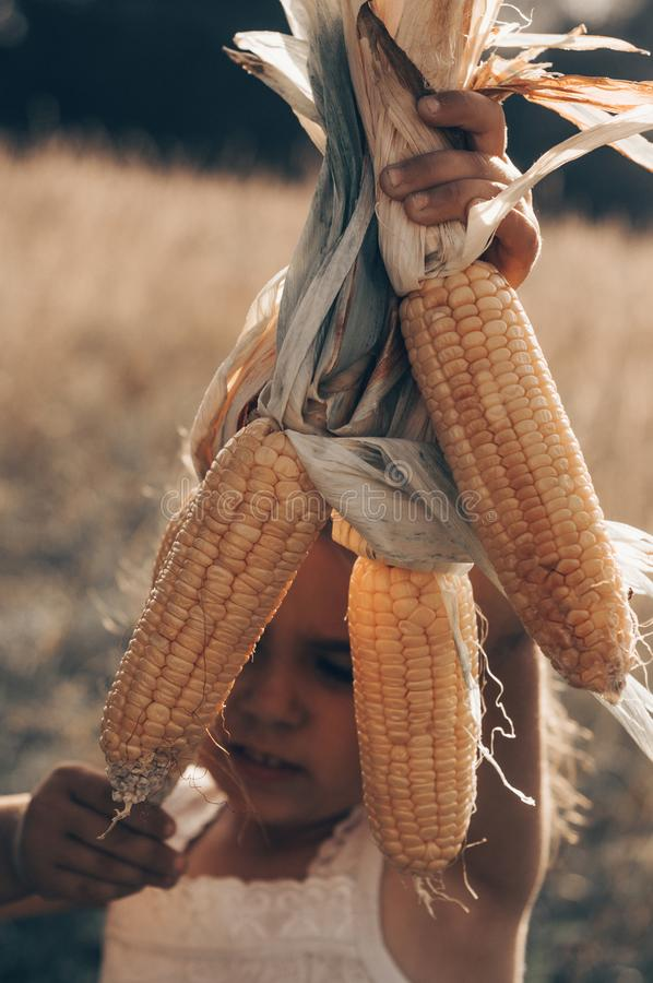 Little girl playing in a corn field on autumn. Child holding a cob of corn. Harvesting with kids. Autumn activities for children royalty free stock photos