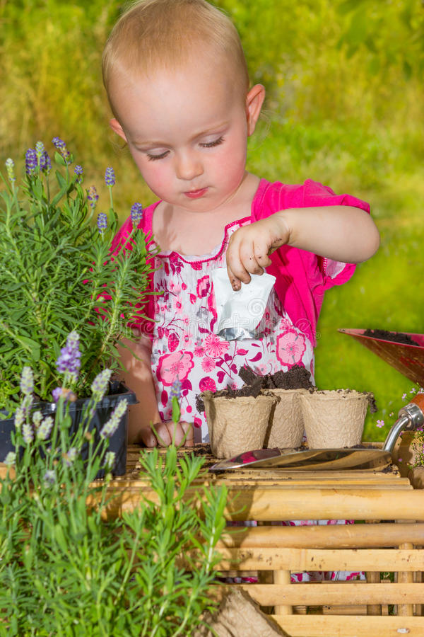 Adorable little girl potting seeds in the garden stock photography