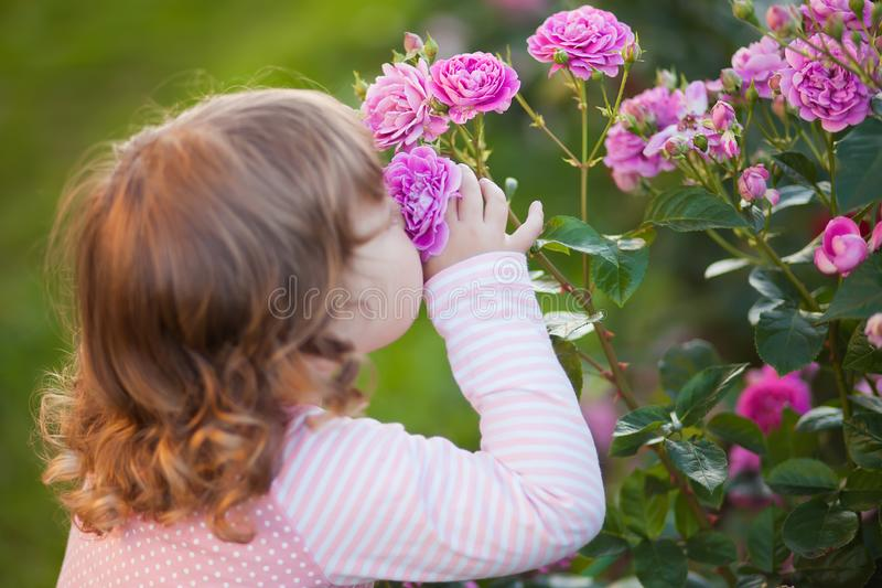 Adorable little girl smelling garden roses. Adorable toddler girl smelling garden roses, summer day royalty free stock image