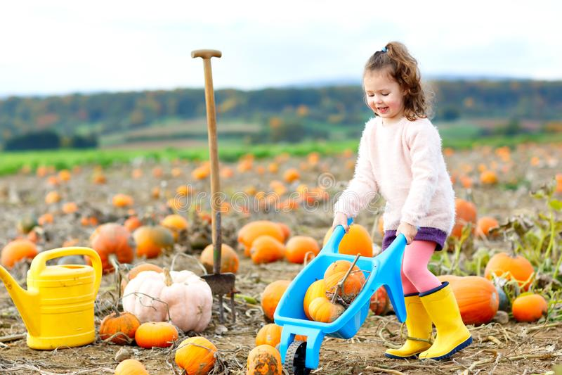 Adorable little girl of three years having fun with farming on a pumpkin patch. Traditional family festival with royalty free stock photos
