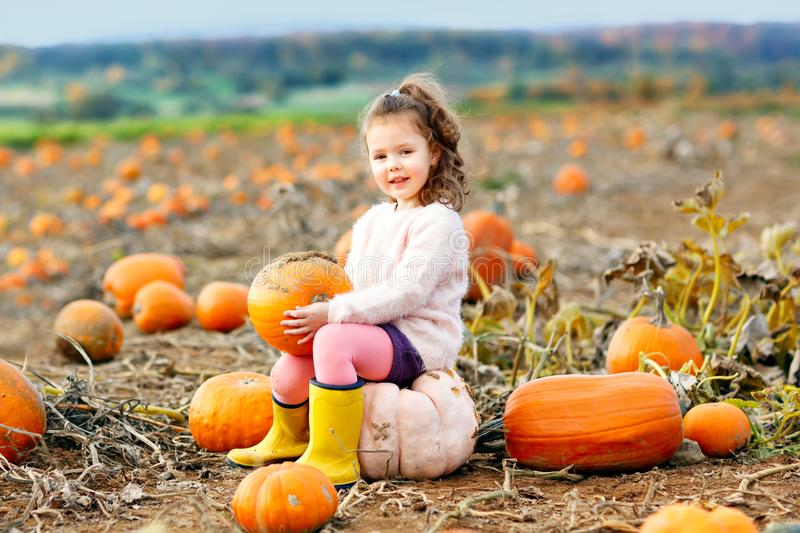 Adorable little girl of three years having fun with farming on a pumpkin patch. Traditional family festival with royalty free stock image