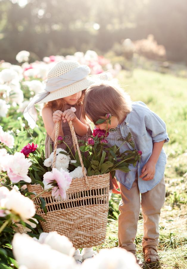 Adorable little girls with a boy are walking in the garden of peonies. royalty free stock photography