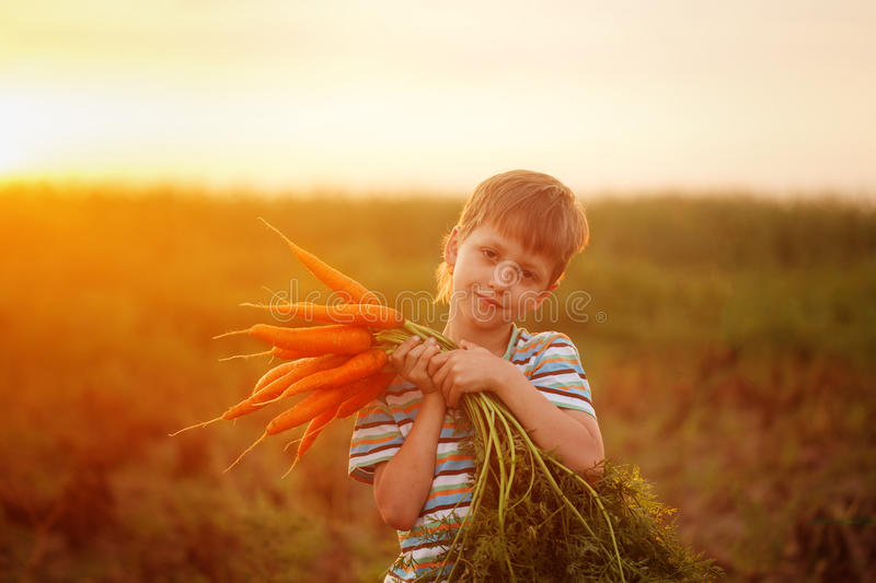 Adorable little kid boy picking carrots in domestic garden on the sunset. Cute little kid boy picking carrots in domestic garden on the sunset stock photography