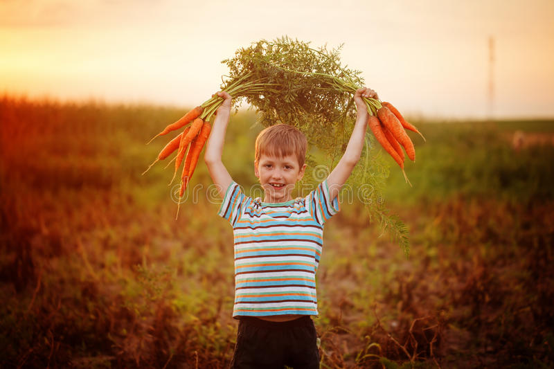 Adorable little kid boy picking carrots in domestic garden on the sunset. Cute little kid boy picking carrots in domestic garden on the sunset stock photos