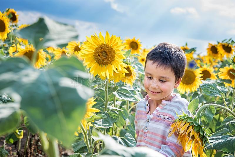 Adorable little kid boy on summer sunflower field outdoor. Happy child sniffing a sunflower flower on green field. Nature, yellow, beautiful, fun, cute, spring stock photos