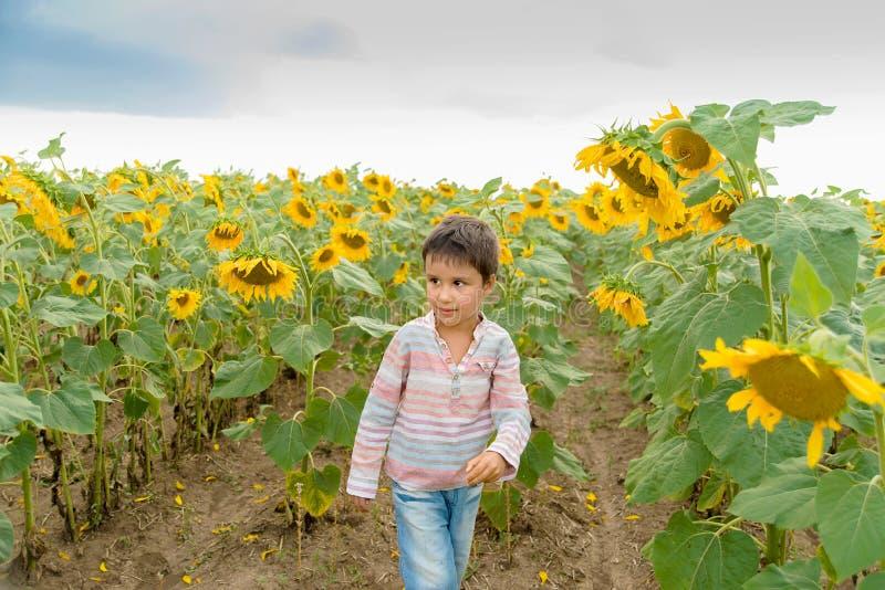 Adorable little kid boy on summer sunflower field outdoor. Happy child sniffing a sunflower flower on green field stock photos