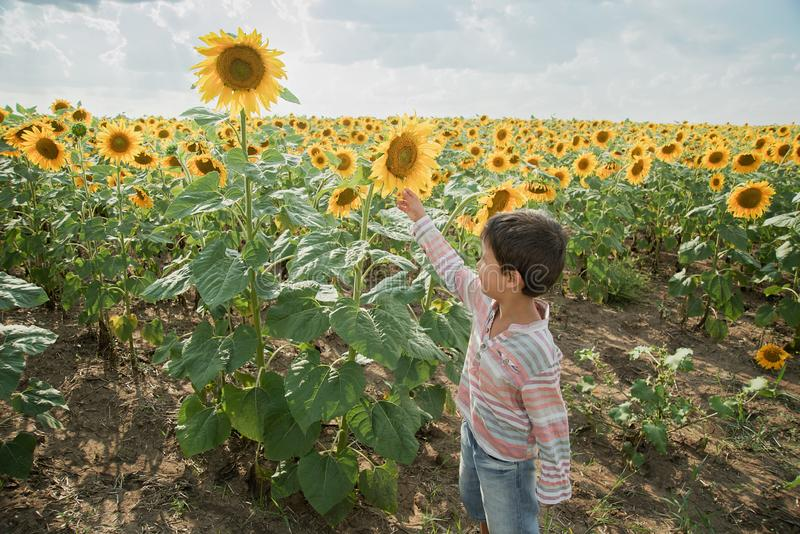 Adorable little kid boy on summer sunflower field outdoor. Happy child sniffing a sunflower flower on green field. Nature, yellow, beautiful, fun, cute, spring royalty free stock photos