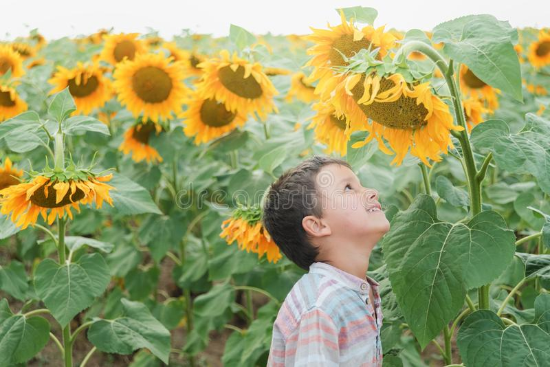 Adorable little kid boy on summer sunflower field outdoor. Happy child sniffing a sunflower flower on green field royalty free stock image