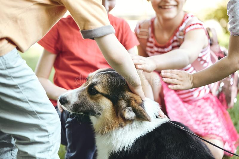 Adorable little kids petting and playing with Welsh Corgi dog on the grass in the park. stock photography