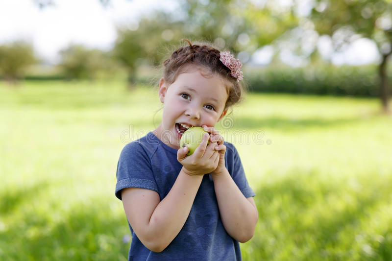 Adorable little preschool kid girl eating green apple on organic farm. Cute child helping with harvest on orchard or garden in late summer stock photography