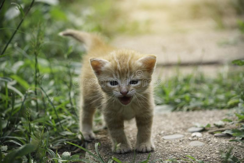 An adorable little red kitten playing outdoor. Portrait of red kitten in garden royalty free stock photo