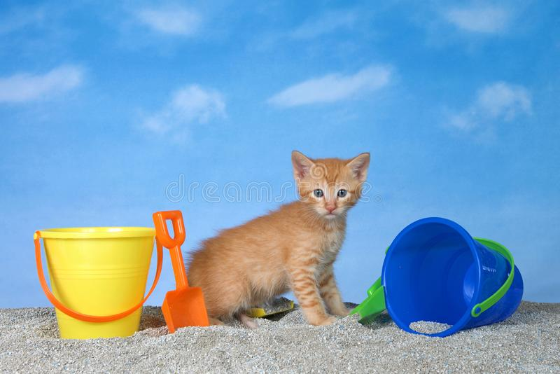 Orange tabby kitten in sand with buckets at the beach. Adorable orange ginger tabby kitten on kitty litter sand beach looking directly at viewer, bright buckets stock photography