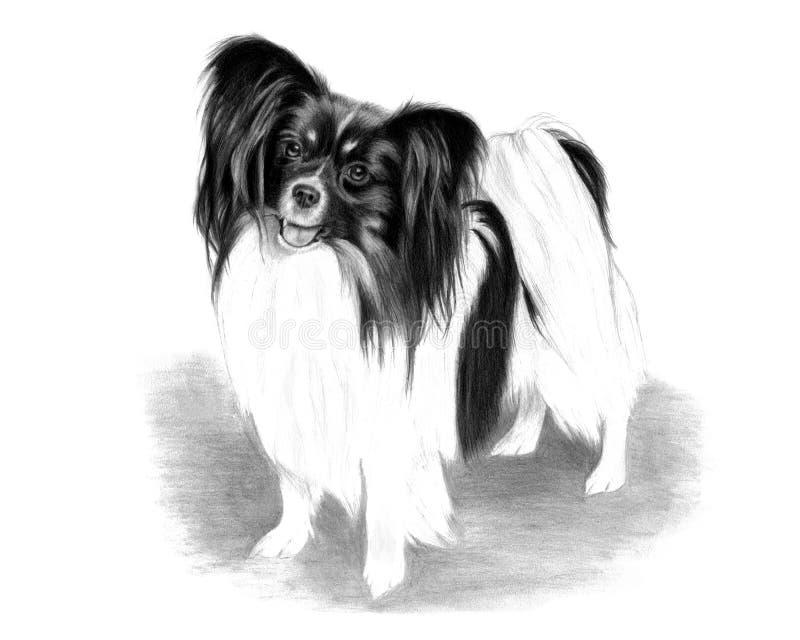 Great Papillon Canine Adorable Dog - adorable-papillon-dog-drawing-15903833  2018_797891  .jpg