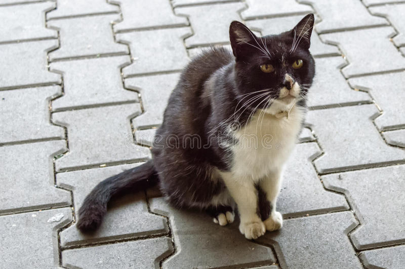 Adorable photograph of a black and white cat. An adorable photograph of a black and white cat istting on a brick floor with sharp, thin whiskers stock images