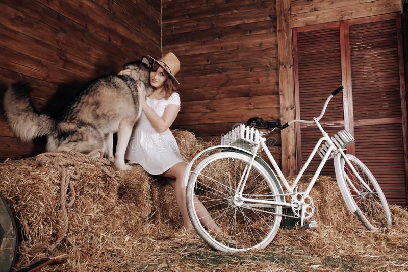 Adorable plus size caucasian girl with red hair in a white summer dress poses with her big dog Malamute best friend on a stock photo