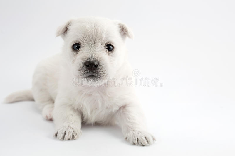 Download Adorable puppy stock image. Image of space, animal, mammal - 28960155