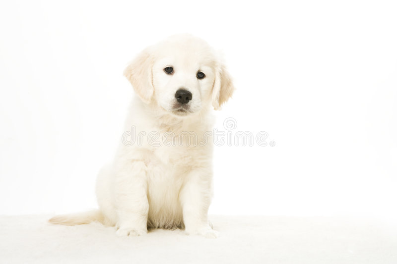 Adorable puppy stock images