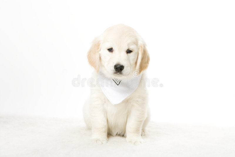 Adorable puppy stock photo