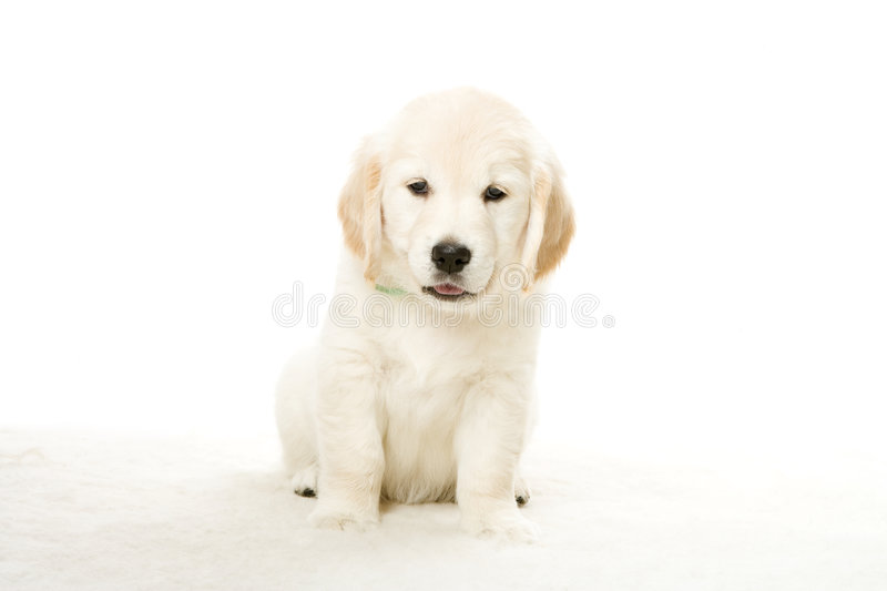 Adorable puppy stock image