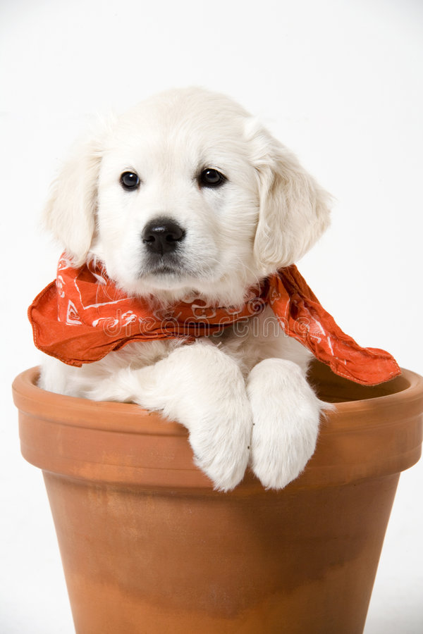 Adorable puppy royalty free stock image