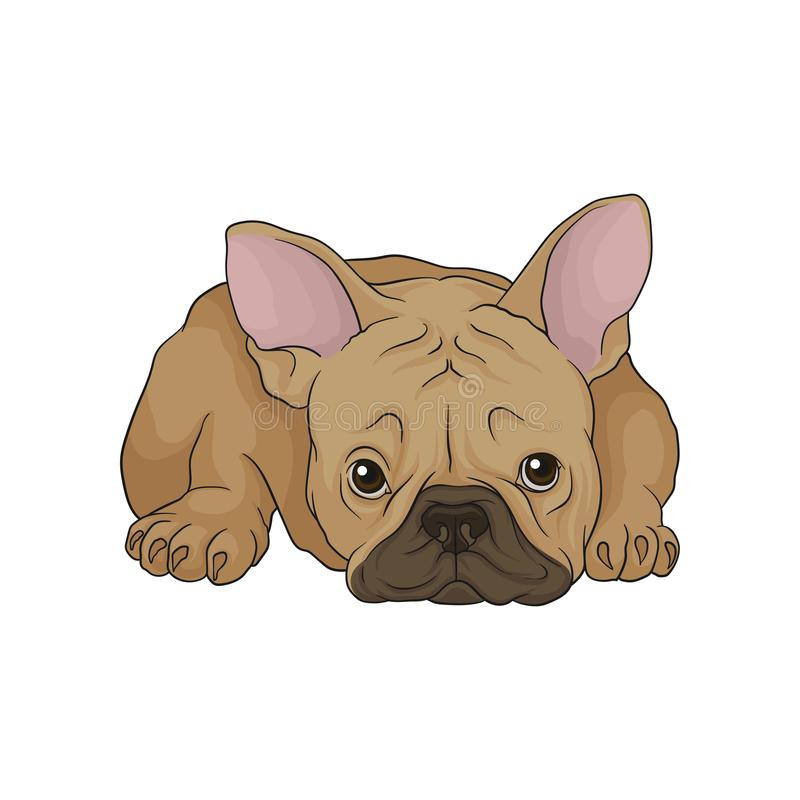 Adorable puppy of boston terrier in lying down pose. Dog with wrinkled muzzle, brown smooth coat and pink ears. Cartoon. Adorable puppy of boston terrier in stock illustration