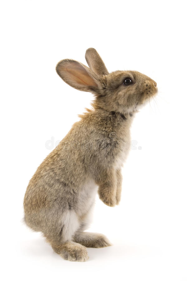 Adorable rabbit isolated on white stock images