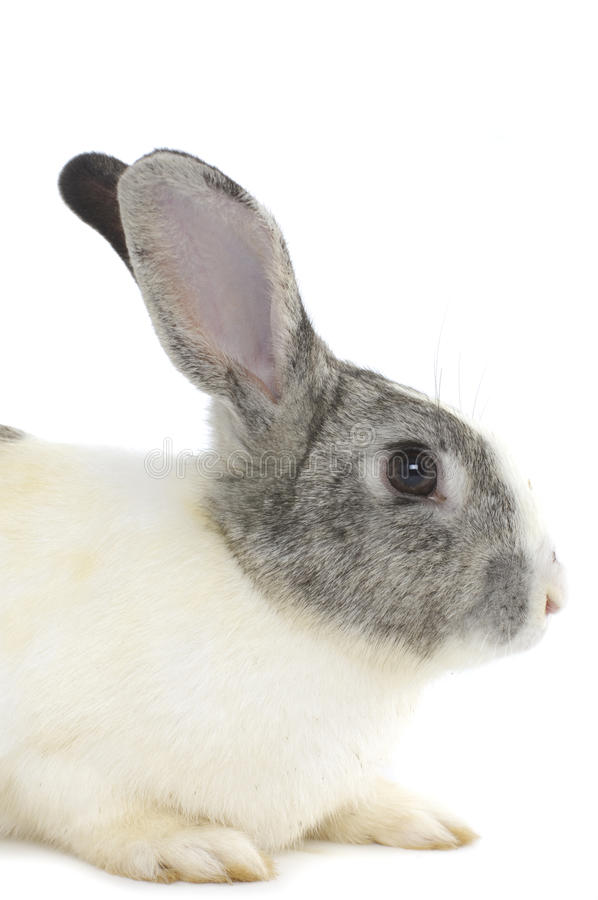 Download Adorable rabbits stock photo. Image of bunny, white, cute - 22141374