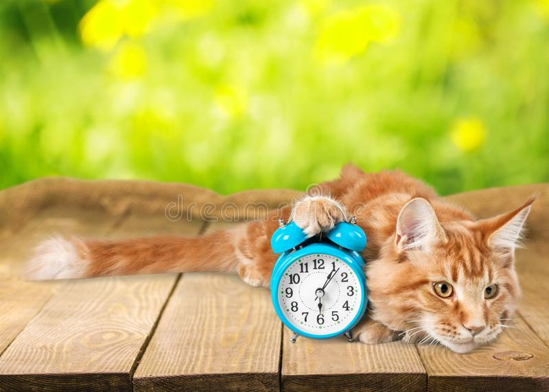 Adorable red cat with clock on table stock photo