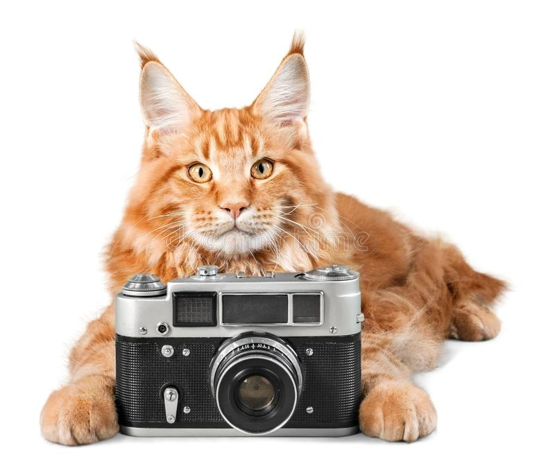 Adorable red cat isolated with camera on light stock photos
